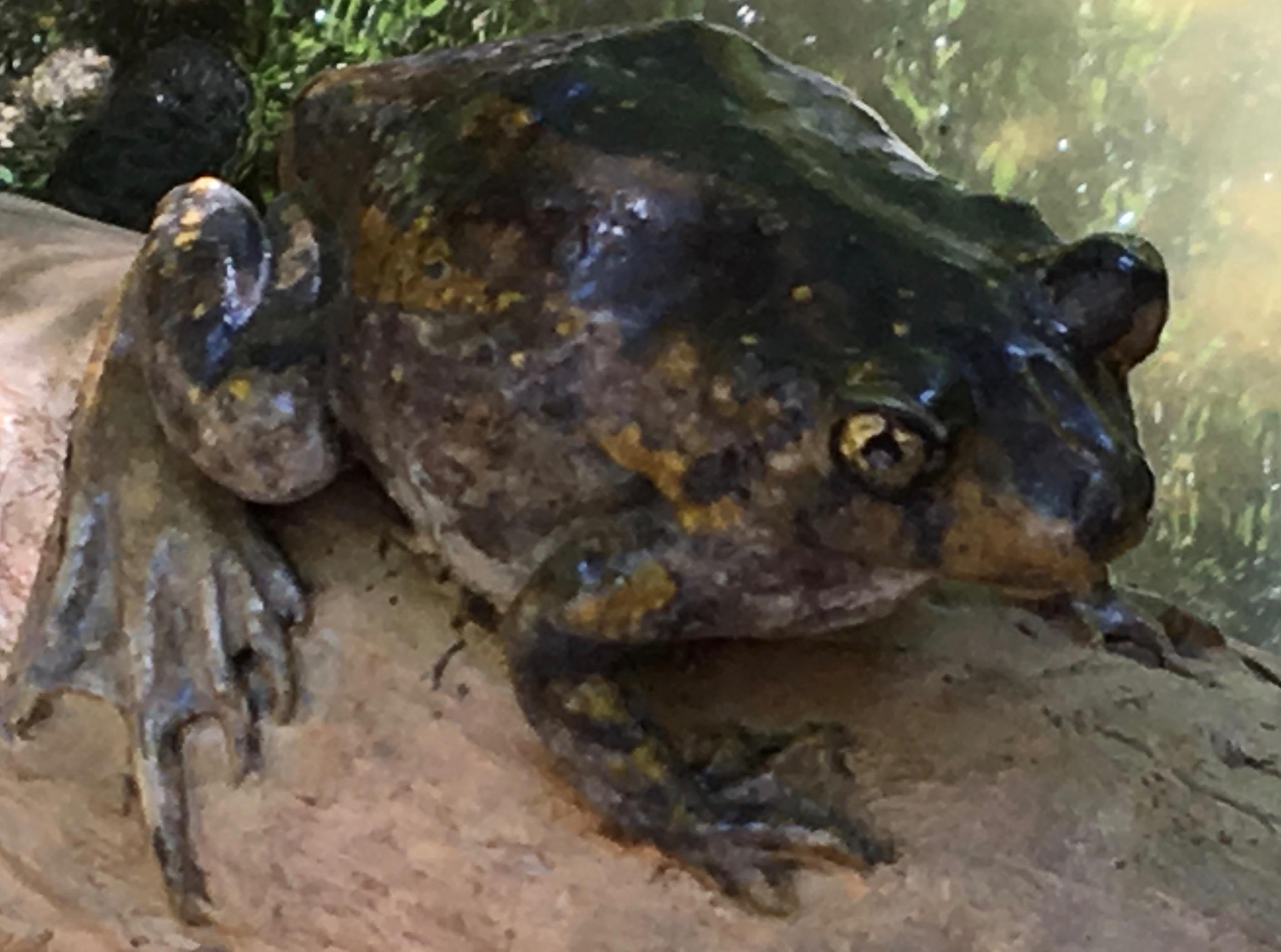 frog in central park